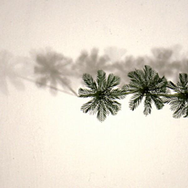 Imagen The paradise line